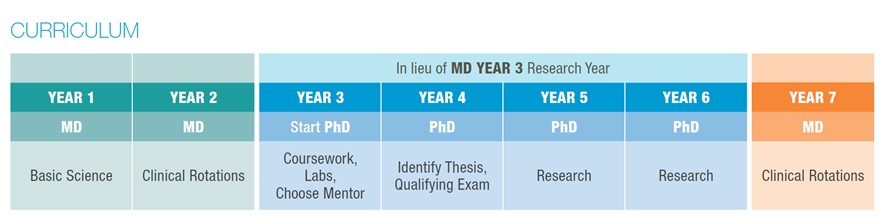Curriculum Information (MD-PhD Programme) | NUS Bulletin